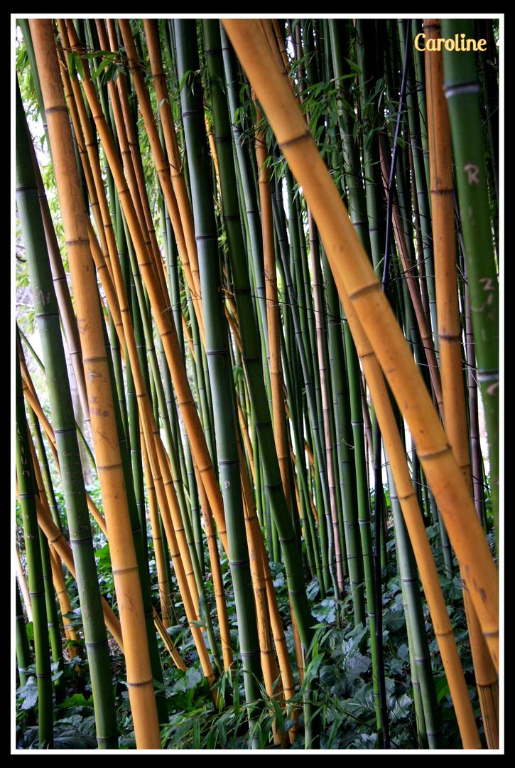 arc en ciel de bambous