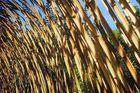 Arceaux de bambous