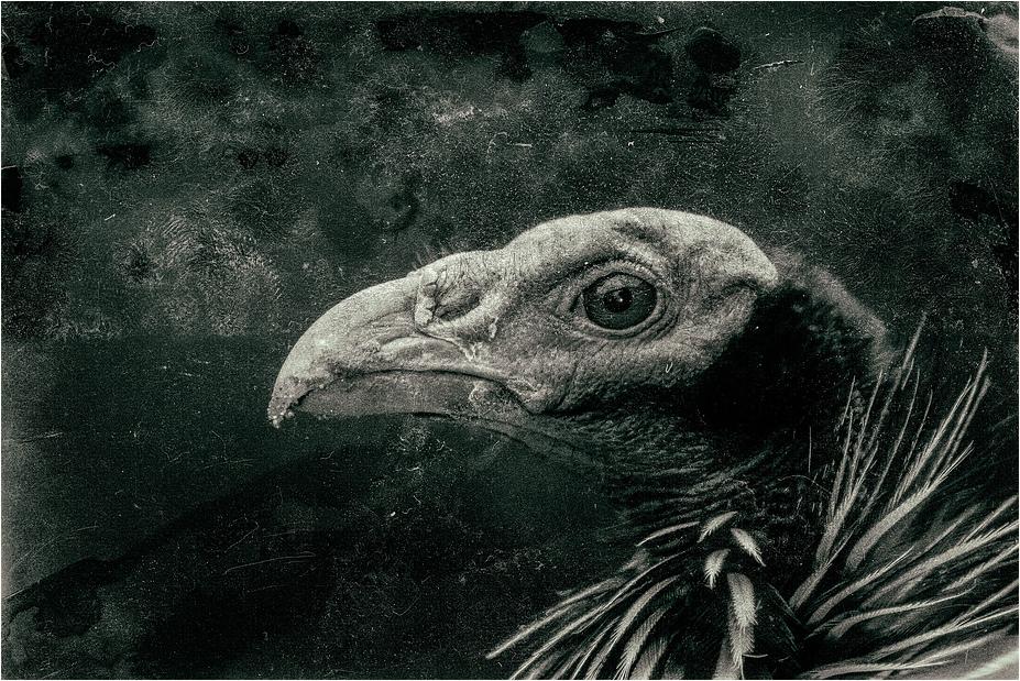 *Archaeopteryxknypx*