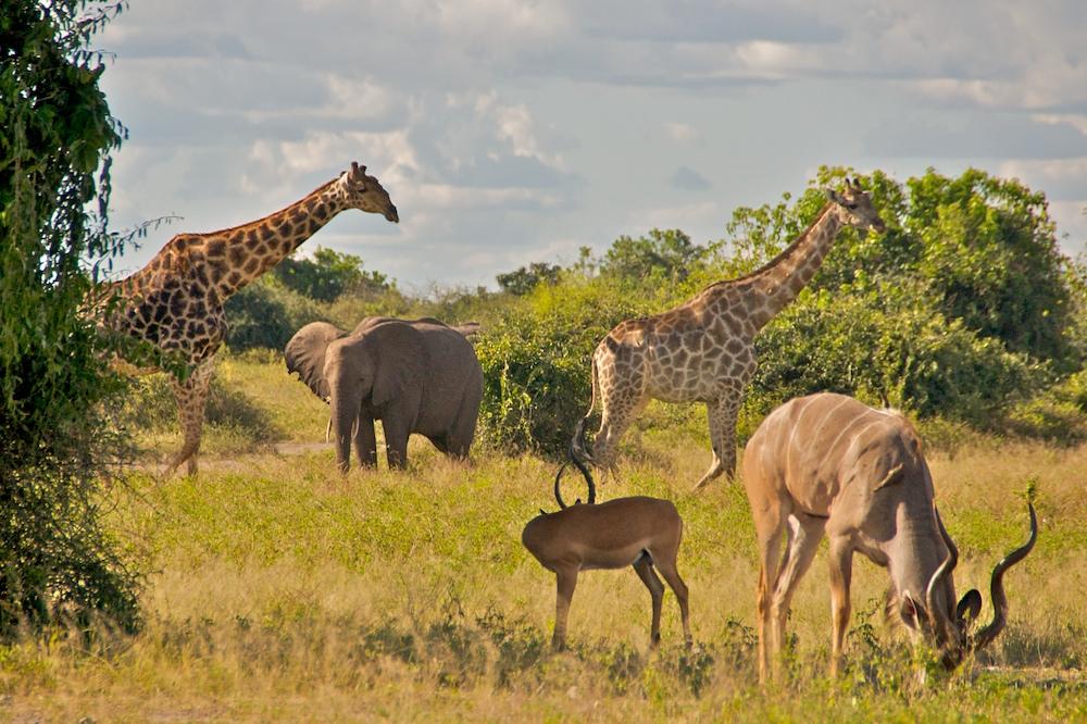 Arche Noah in Botswana