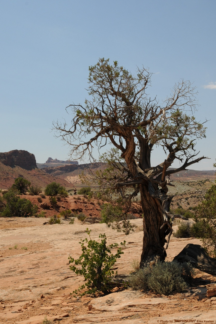 Arches National Park 22