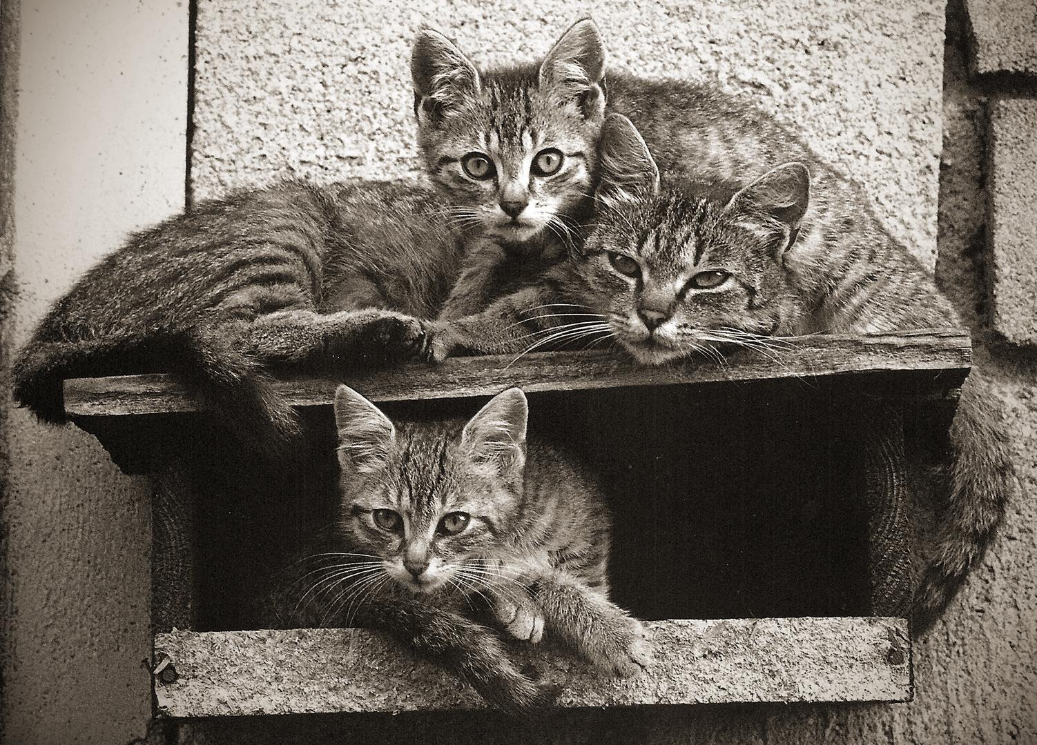 Archiv 28, Nachbar's Katzen, August 2002