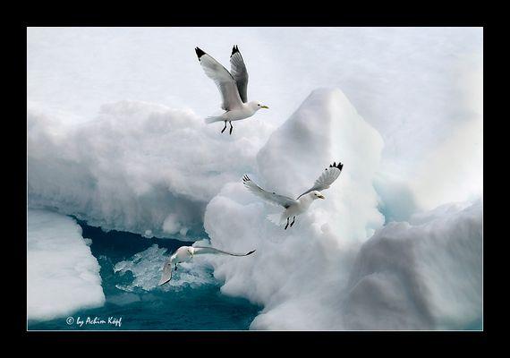 Arctic-Art #90