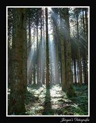 Ardennes 2
