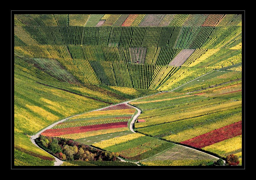 Arena des Herbstes ... und des Weines