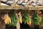 Arezzo ( Toskana ) -Toskanische Impressionen-