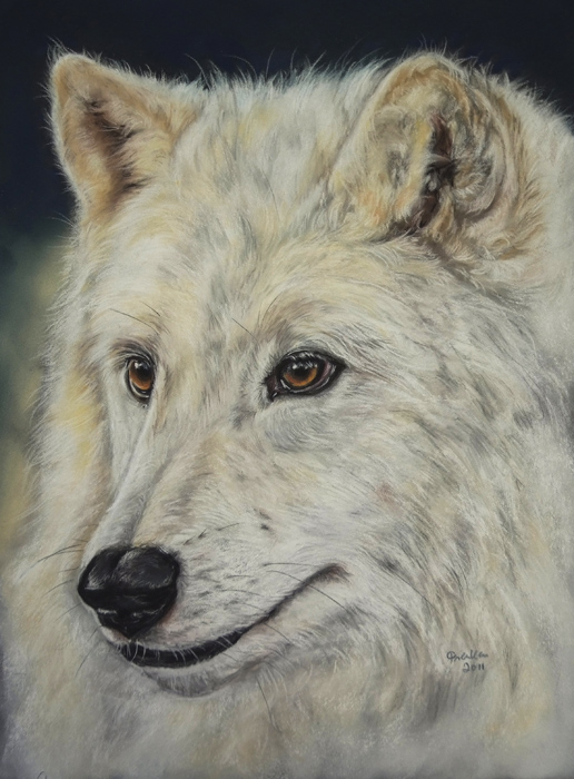 Arktis Wolf