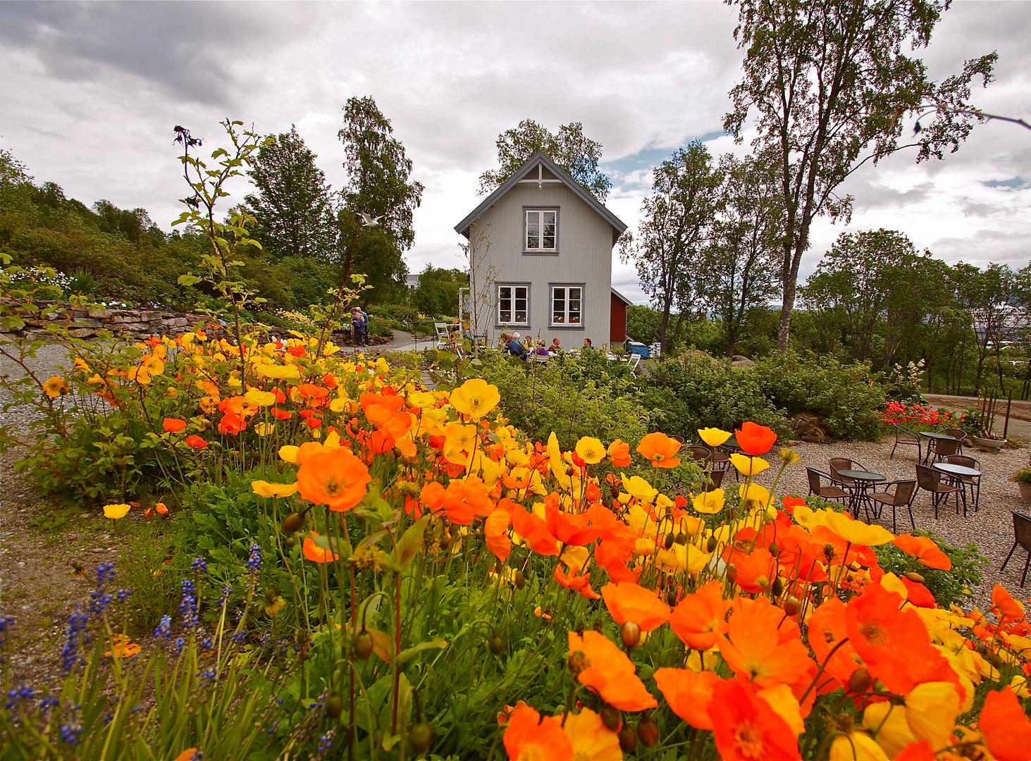 Arktisch Botanischer Garten in Tromsö