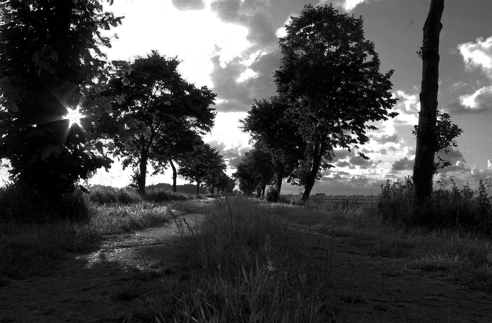 Arle am Abend.............. Ostfriesland............