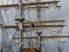 Armada de Rouen 2003