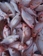 arme Fische