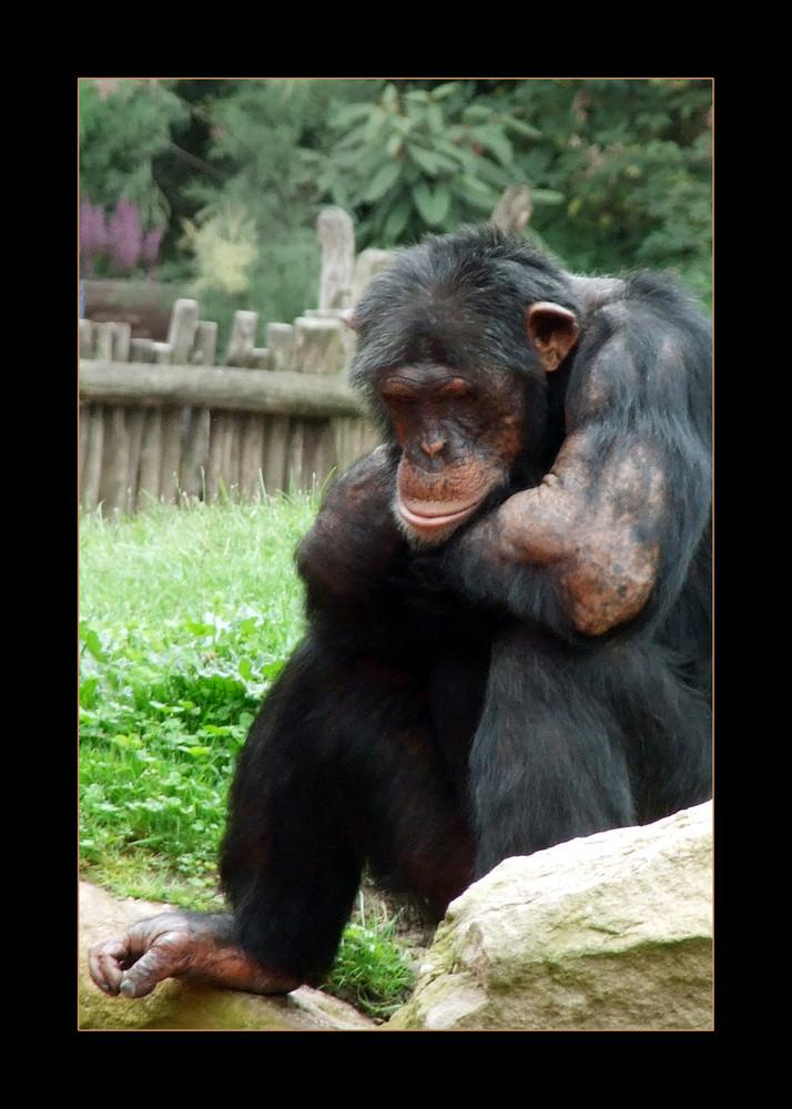 armer trauriger affe foto bild tiere zoo wildpark. Black Bedroom Furniture Sets. Home Design Ideas