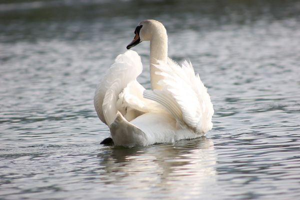armonia sul lago