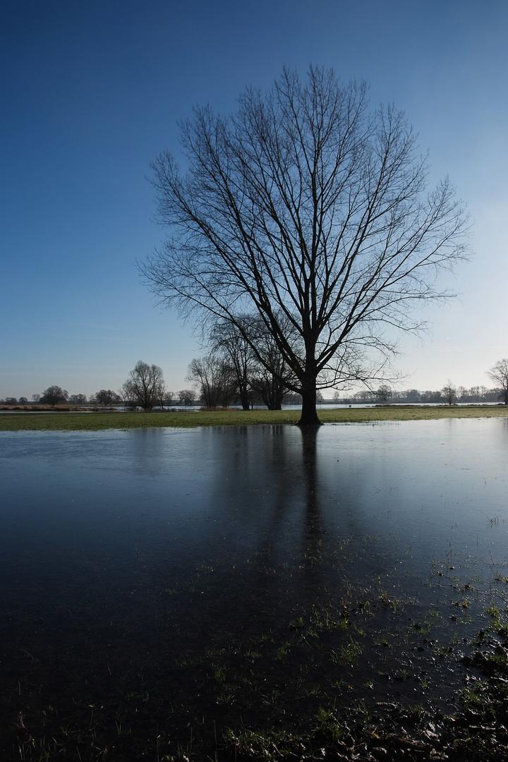 Arneburg - Elbe Marina flussaufwärts, symmetrischer Baum