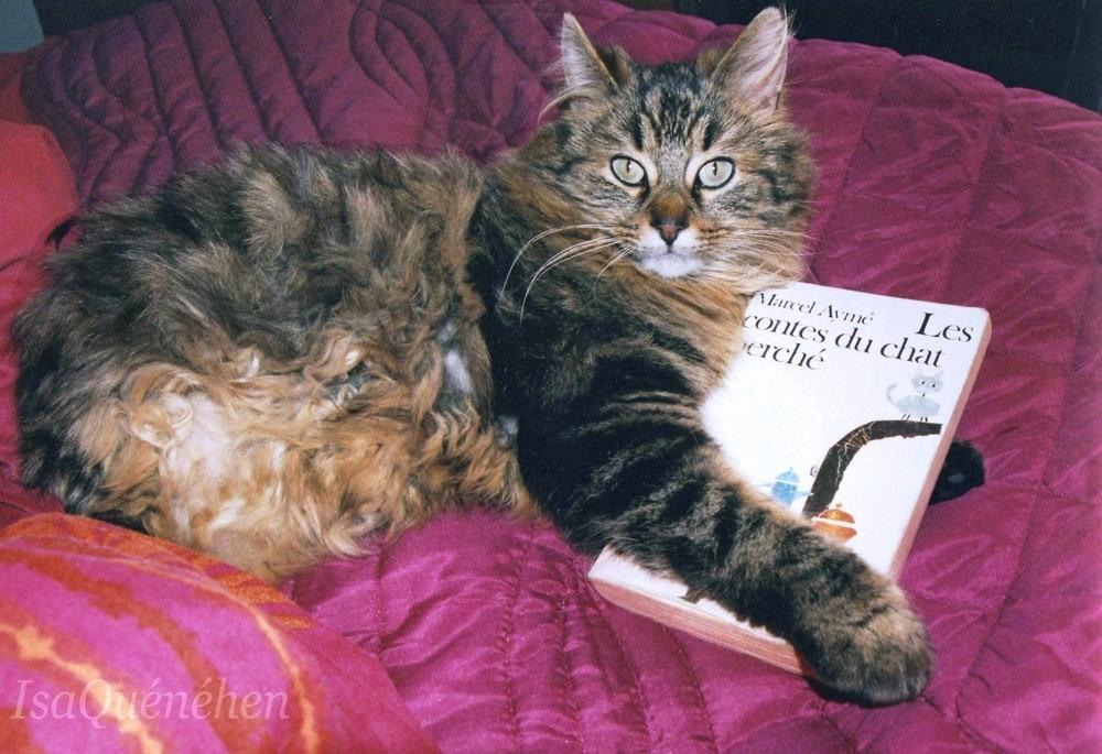 arod et le chat perché