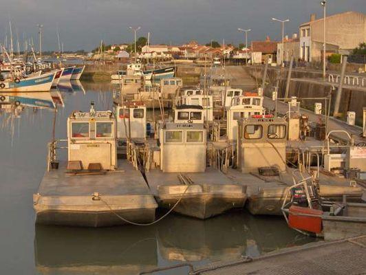 Arrivé des barges à huitres au Chapus à Marennes Oléron