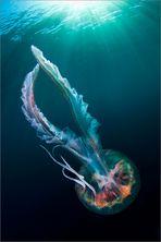 """"""" art of medusa """""""