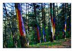 Arte en el bosque