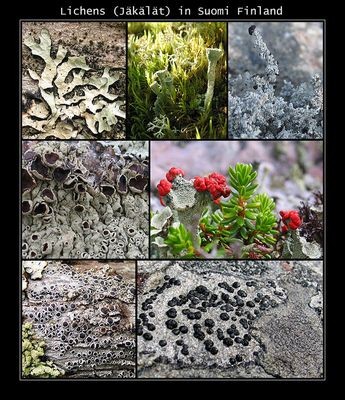 Artenvielfalt (1)