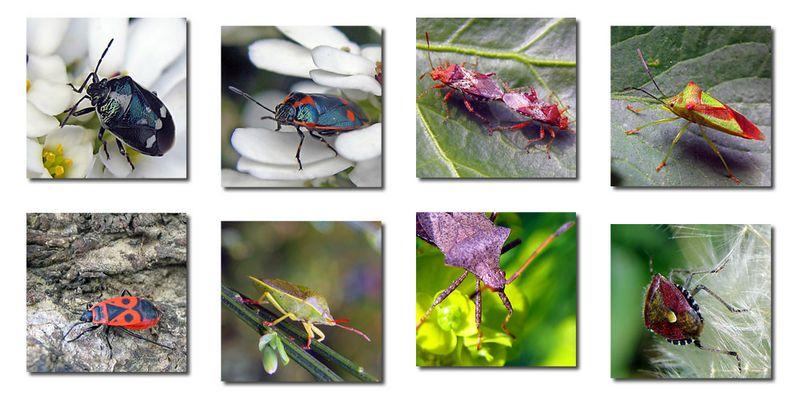 Artenvielfalt...