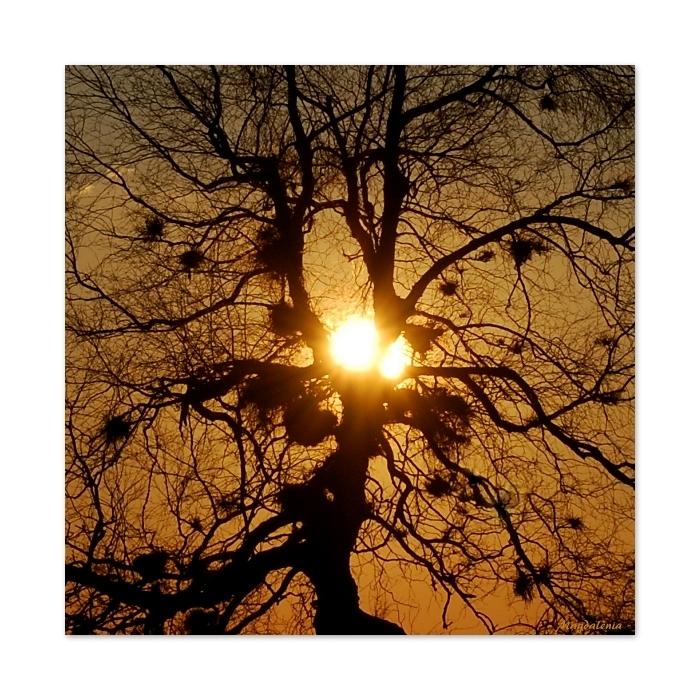 Artères et vaisseaux solaires