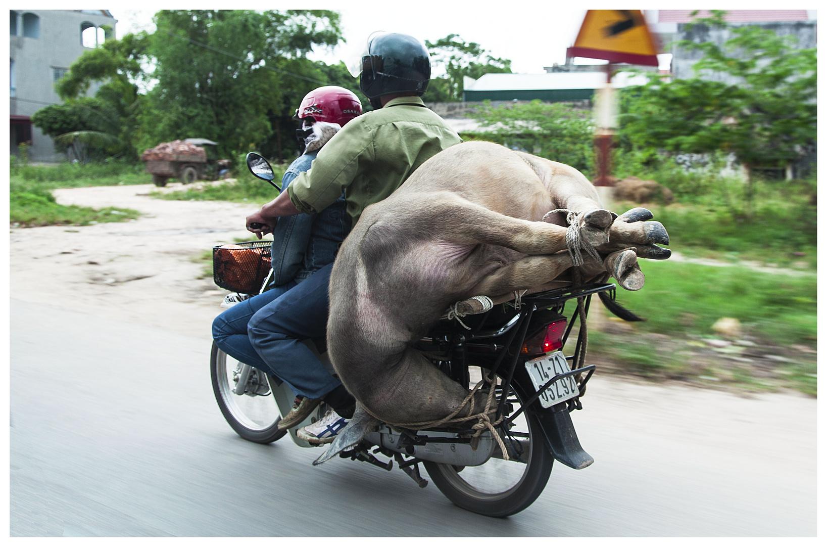 Artgerechter Viehtransport