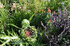 Artischocke 2 - Park der Gärten