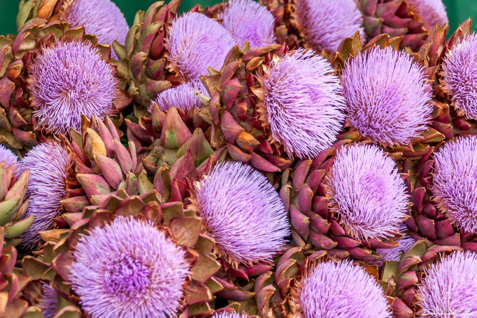 Artischocken Blüten