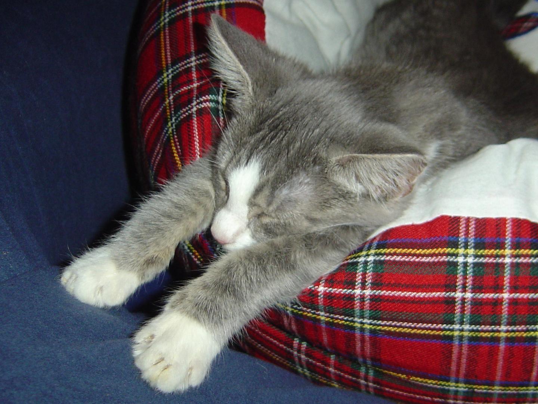Artus, unsere Schlafmütze