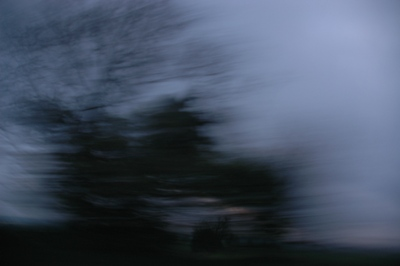 arvore obscura