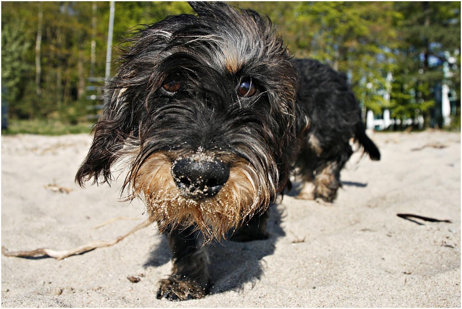 Asco - der liebste Hund der Welt