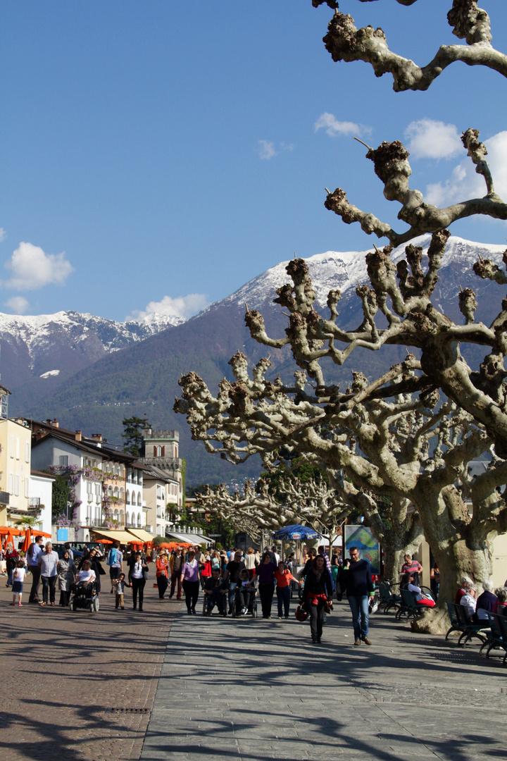 Ascona's Platanen