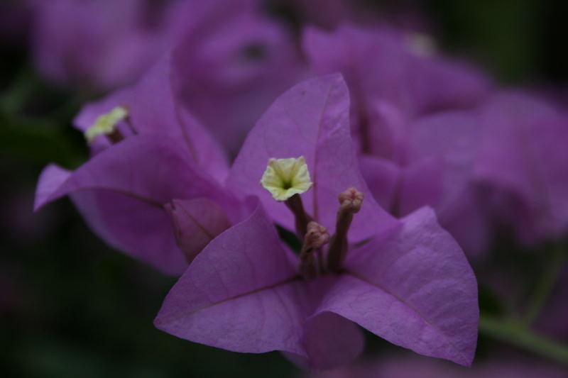 Asiatische Pflanze