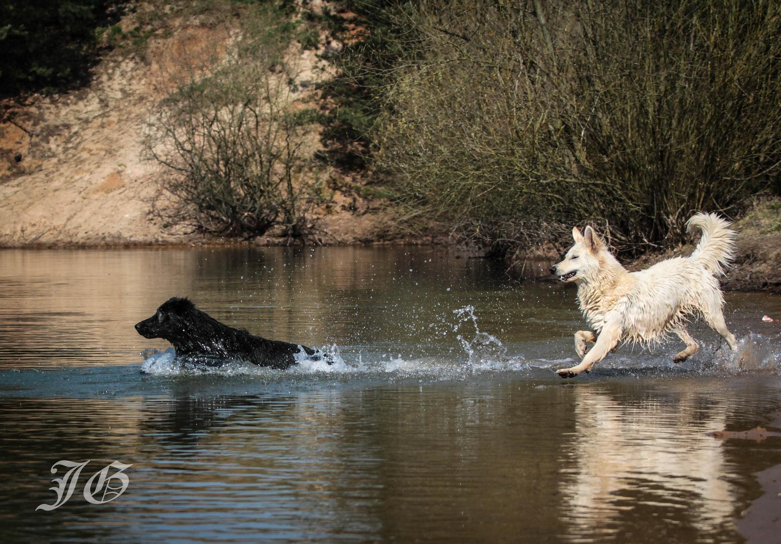 Askia.....die über das Wasser lief :-)