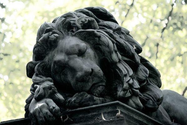 Aslan auf dem Mainzer Hauptfriedhof