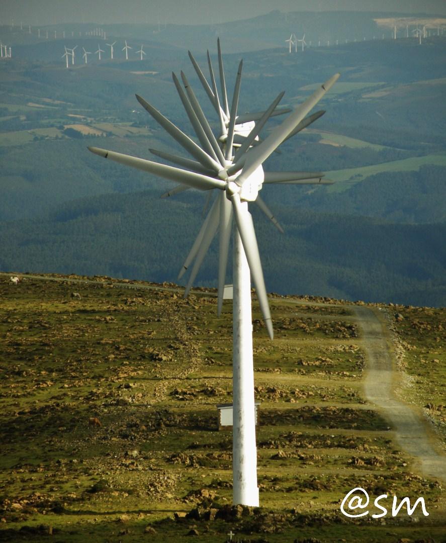 Aspas al viento