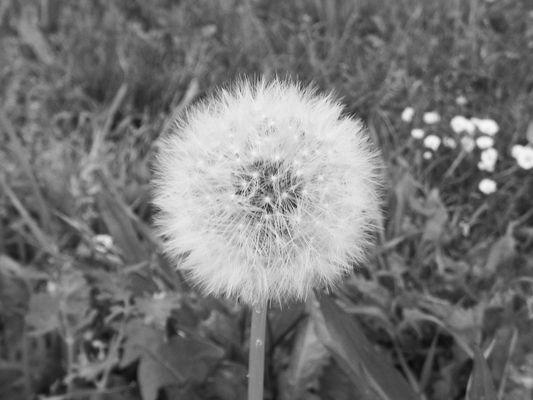 aspettando il vento...