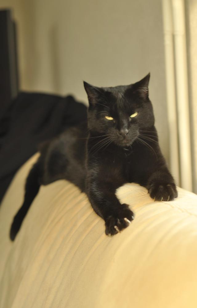 Asrahel der Bonsai-Panther Nummer 2