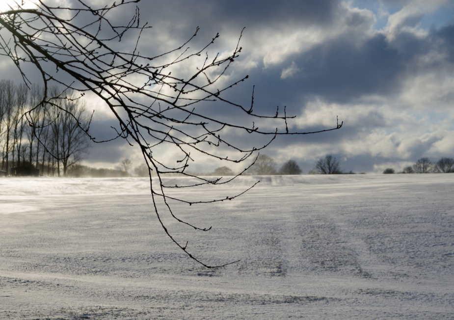Ast Feld und Schnee