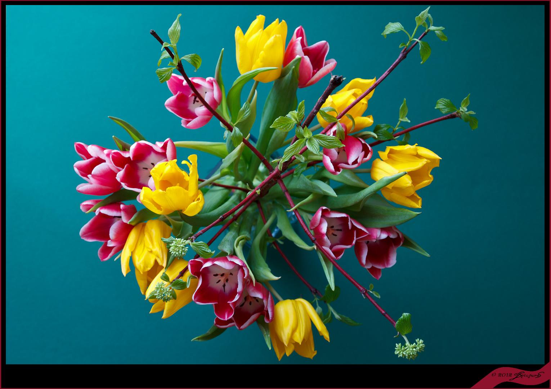 Ast mit Blumen