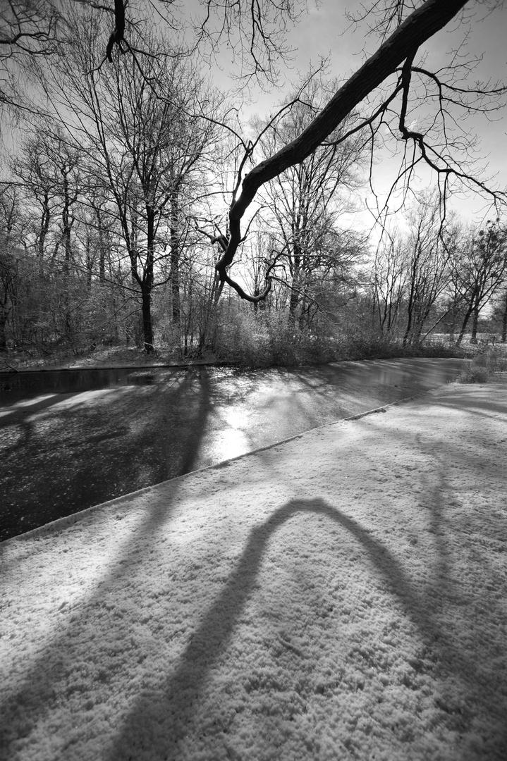 Ast mit Schatten