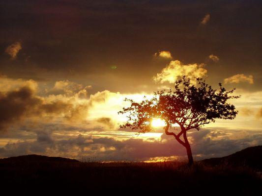 Ast umarmt untergehende Sonne
