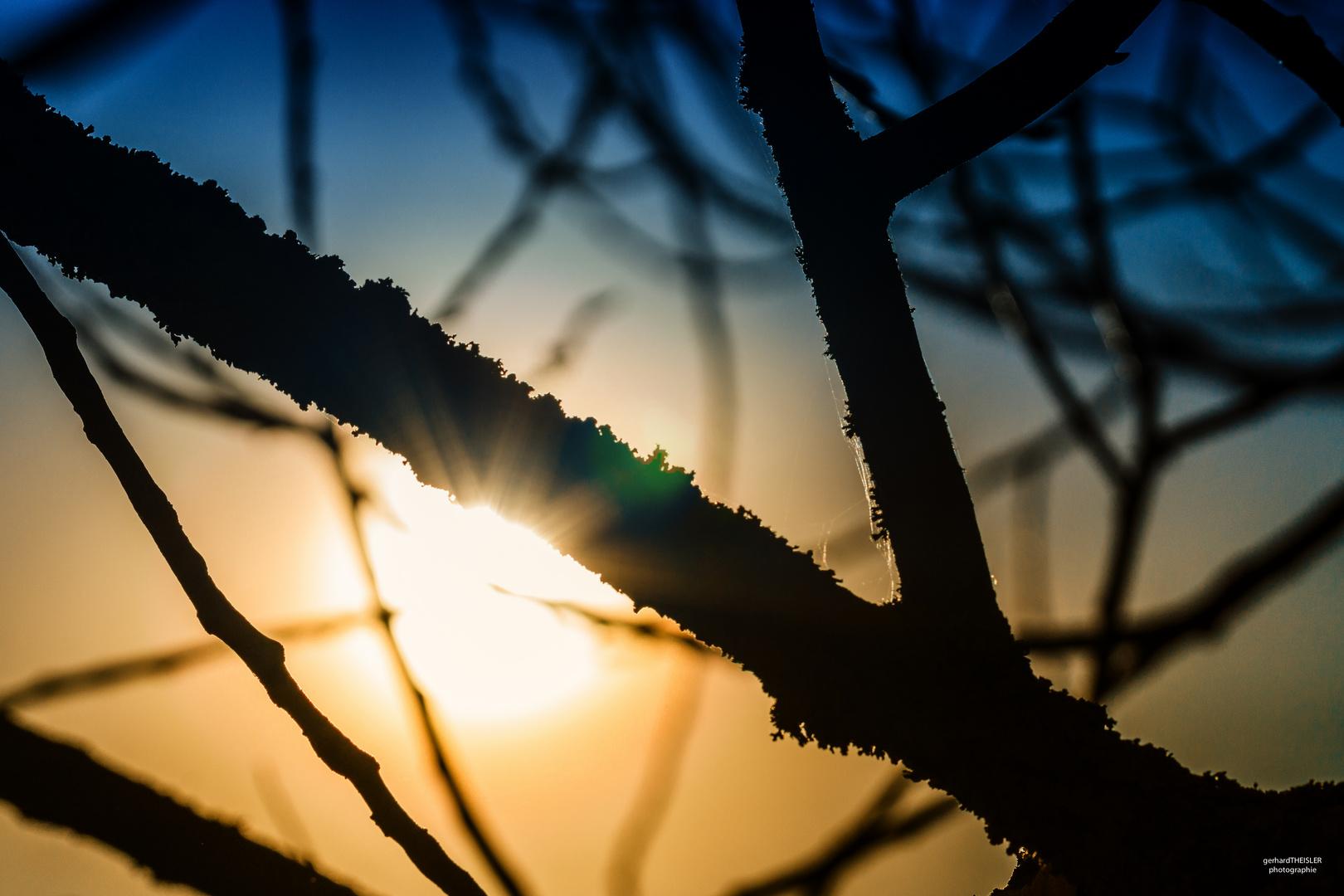 Ast und Sonne