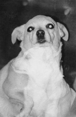 Astral Puppy