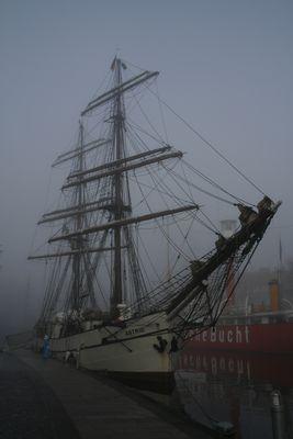 Astrid im Nebel