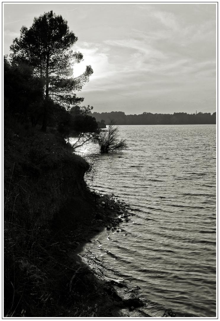 atardece en la orilla del pantano