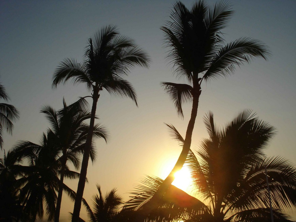 Atardecen las palmeras.