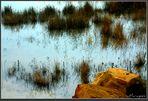Atardecer en la estanca
