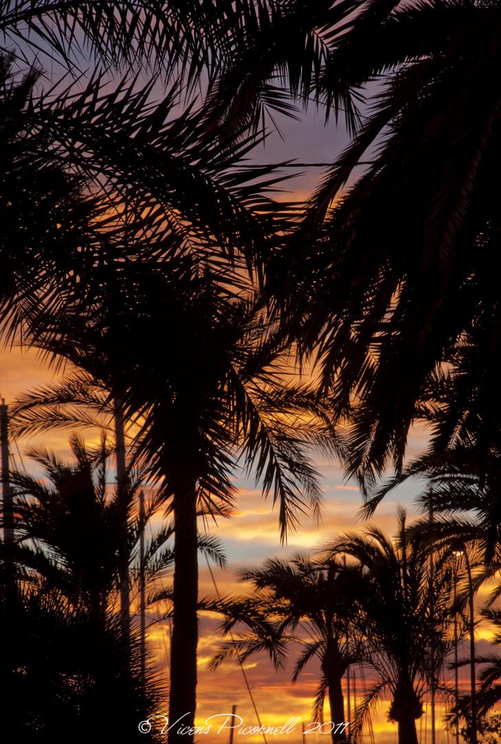 atardecer entre palmeras