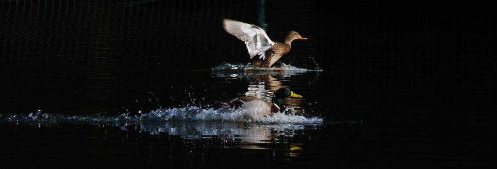 Aterrissage en couple